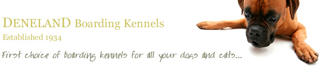 Boarding Kennels Dartford